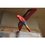Lendav papagoi väike